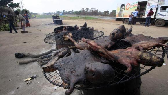 De la viande de brousse vendue en bord de route à Yamoussoukro, en Côte d'Ivoire. La chasse au gibier de brousse a été interdite, pour éviter la propagation du virus Ebola.